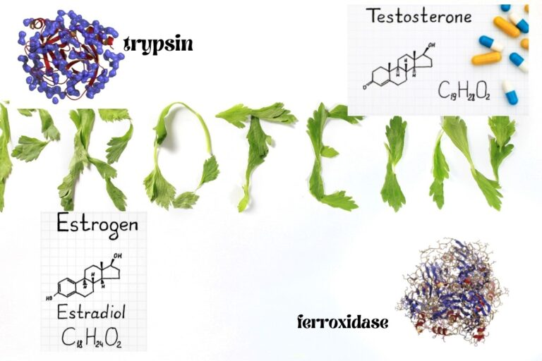 Proteins' Function, Shape, Examples, and Characteristics