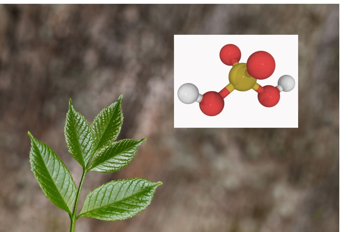 sulfur-compounds-for-growth