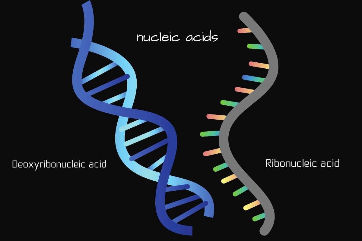 Nucleic acids-DNA and RNA