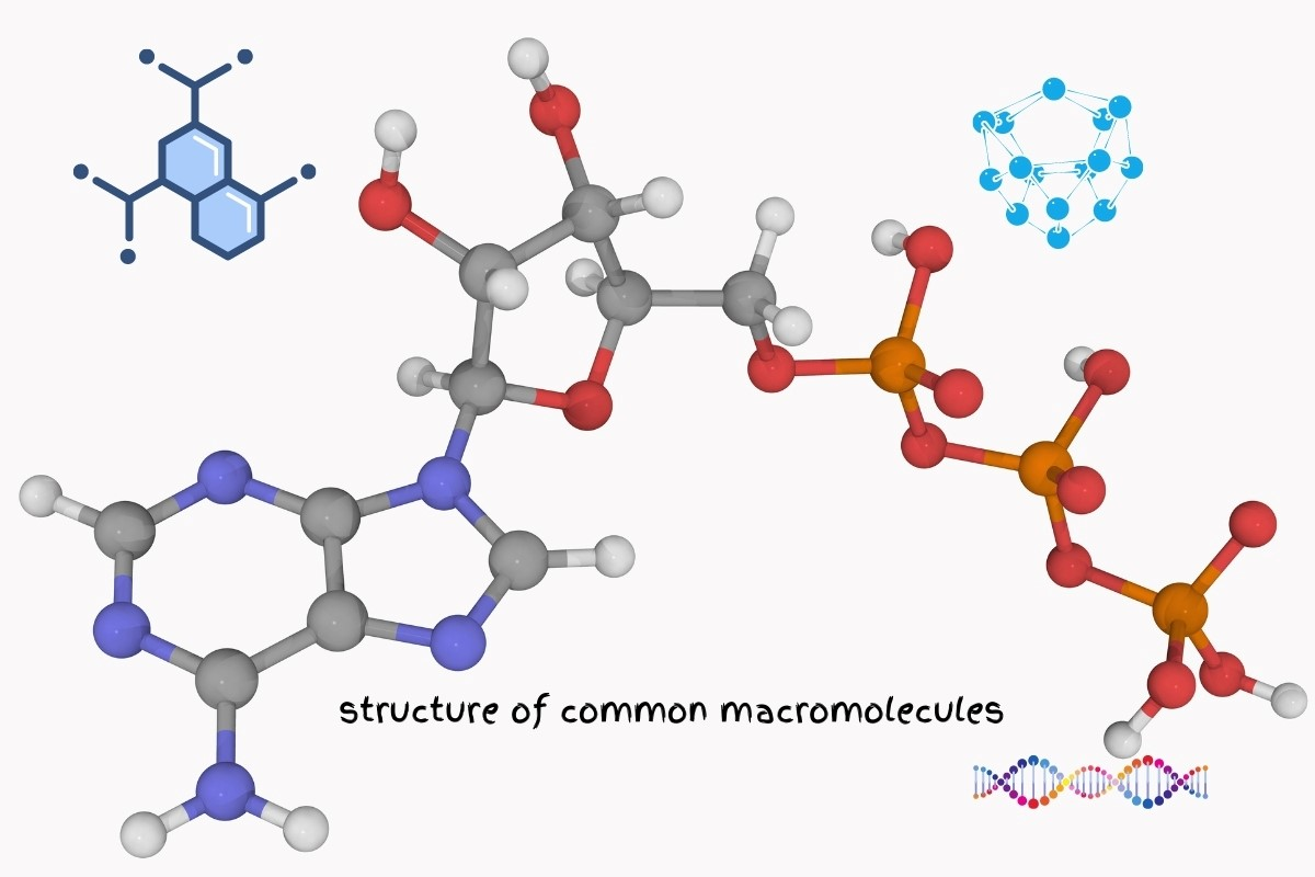 Structure of Common Macromolecules